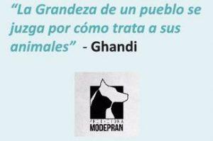 modepran-ghandi