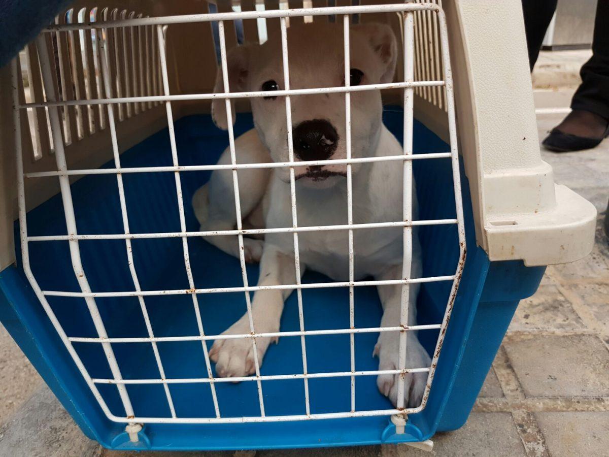 Levante EMV publica la incautación de una cachorra en Valencia en la que participó Modepran