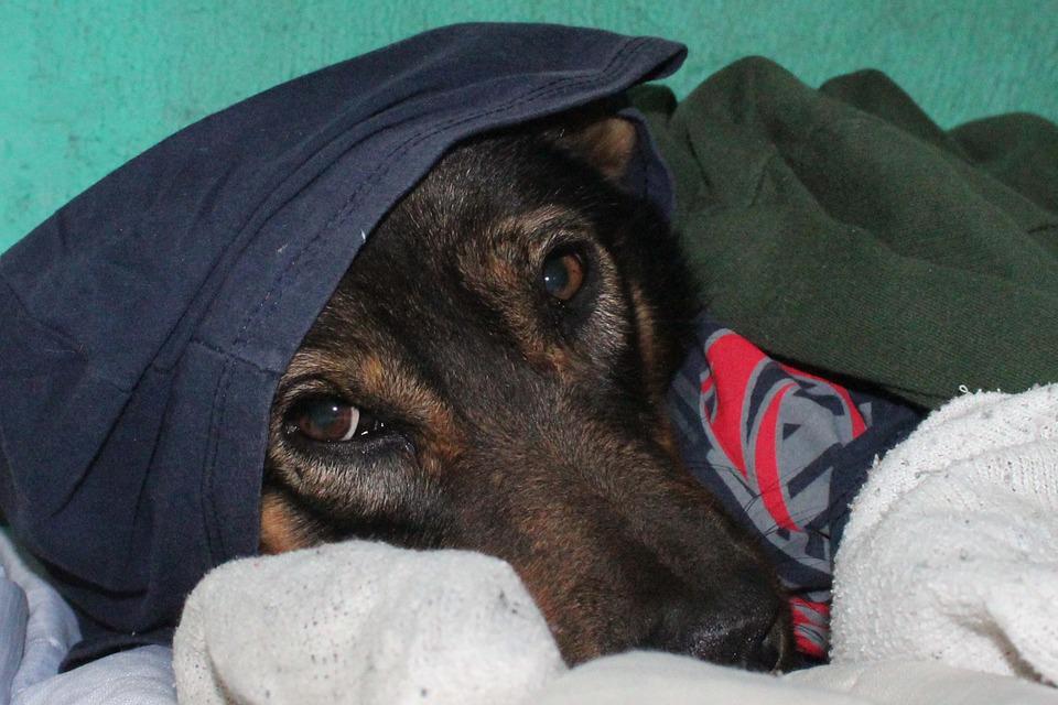 Consejos para proteger a nuestro perro contra el frío