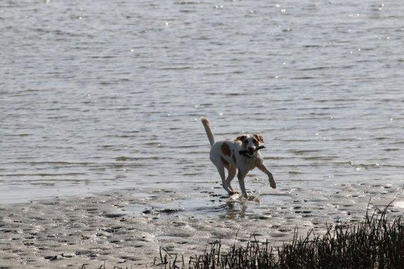 Las Provincias: 'Los perros también emigran'