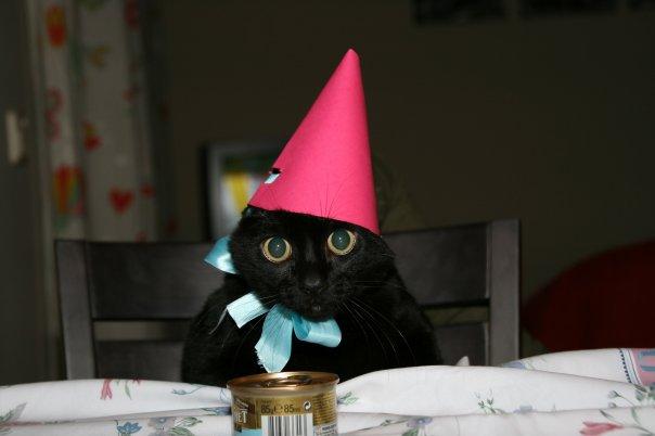 Siete razones para adoptar un gato adulto