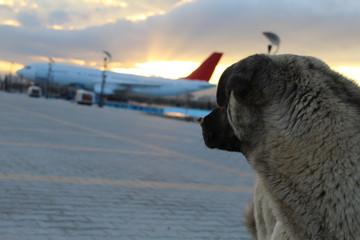 ¿Vale la pena viajar en avión con tu perro?