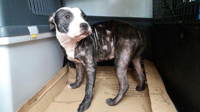 Los medios publican la prohibición de tener animales a un maltratador de perros