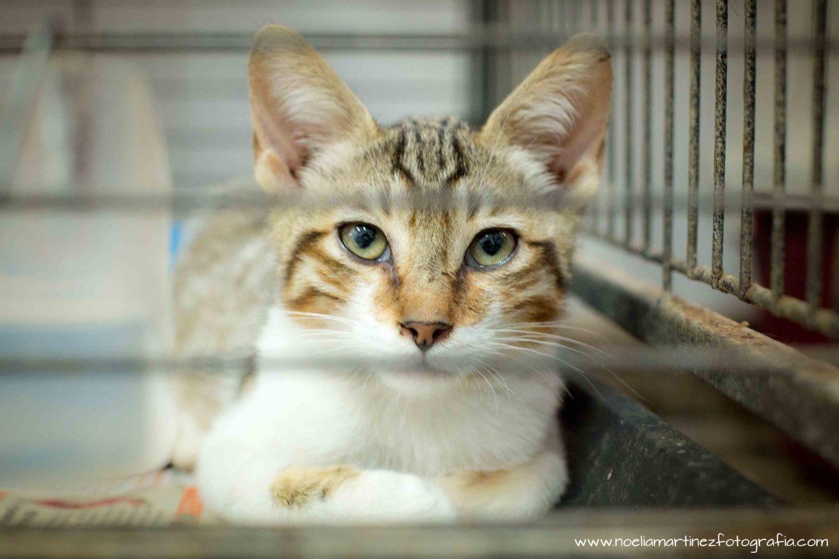 Tres consejos para controlar la proliferación de colonias felinas