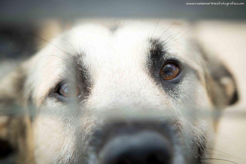 Estas fallas, ayuda a tu perro a protegerse de los petardos