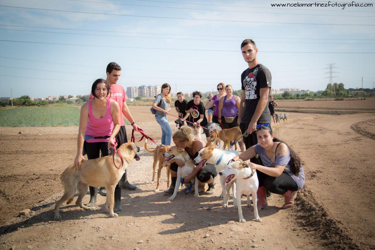 Que no te confundan: las protectoras somos VIDA para los animales