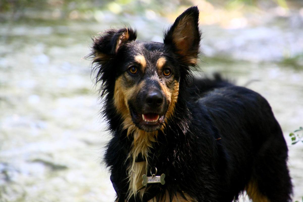 Ideas para pasar las mejores vacaciones con mascota